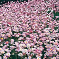 Wildflower Essennce [ワイルドフラワーエッセンス]